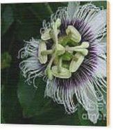 Passion Fruit Flower Wood Print