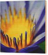 Passion Is Energy Wood Print