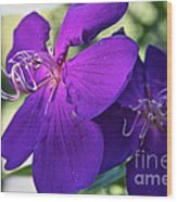 Passion Purple Wood Print