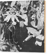Passionflower And Tendrils Wood Print