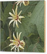 Passionflower Wood Print by Archie Young