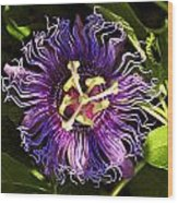 Passionflower Wood Print