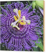 Passionflower Purple Wood Print