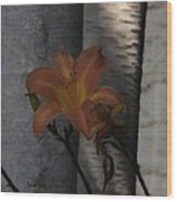 Passover Wood Print