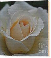 Pastel Ebb Tide Wood Print