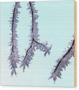 Pastel Glow On The Frost Wood Print