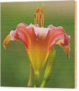 Pastel Lilyform Wood Print