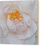 Pastel Rose Wood Print