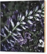 Pastel Veronica Wood Print