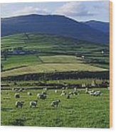 Pastoral Scene Near Anascual, Dingle Wood Print
