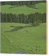 Pastures In Azores Islands Wood Print