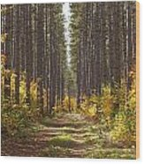 Path Into The Forest In Autumn Sault Wood Print