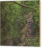 Path Less Traveled Wood Print