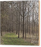 Path Of The Trees Wood Print