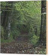 Path Through The Woods Inistioge Wood Print