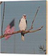 Patriotic White-tail Kite Wood Print