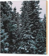 Pat's Winter Trees 1d Wood Print