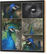 Pavo Cristatus IIi The Heart Of Solitude  - Indian Blue Peacock  Wood Print