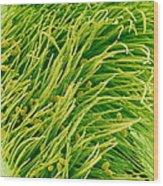 Pea Flower Stigma, Sem Wood Print