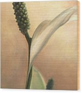 Peace Lily Wood Print