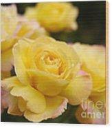 Peace Rose 2 Wood Print