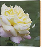 Peace Rose Wood Print
