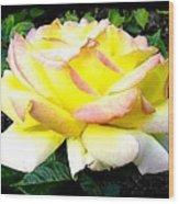 Peace Rose- Okanagan Valley Wood Print
