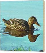Peaceful Duck - 0993c2502e Wood Print
