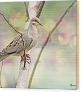 Peaceful Mourning Dove Wood Print