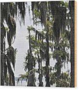 Peaceful Swamp Wood Print