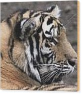 Peaceful Tiger Wood Print