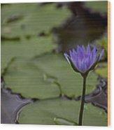 Peaceful Waterlily Wood Print