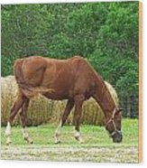 Peacefully Grazing Wood Print