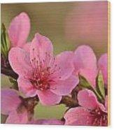 Peach Beautiful Wood Print