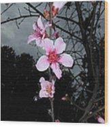 Peach Blooms Wood Print