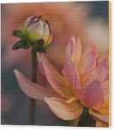 Peach Dahlias Wood Print