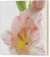 Peach Flushed Gladiolus Wood Print