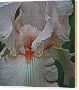Peach Iris Wood Print