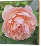 Peach Peony Flower Wood Print