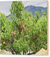 Peaches On Tree Wood Print by Elena Elisseeva