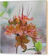 Peachy Alabama Azalea Wood Print