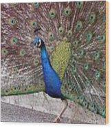 Peacock - 0013 Wood Print