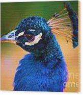 Peacock Blue Wood Print