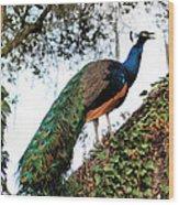 Peacock Calling Wood Print