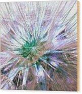 Peacock Dandelion - Macro Photography Wood Print