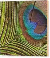 Peacock Feather Wood Print
