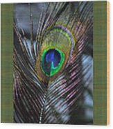 Peacock Feather Ll Wood Print