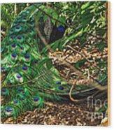 Peacock Hiding Wood Print
