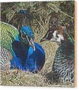 Peacock Love Wood Print