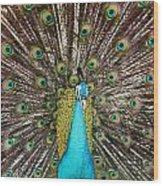 Peacock Plumage Feathers Wood Print